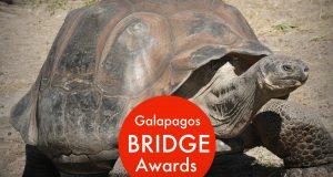 galapagos bridge awards