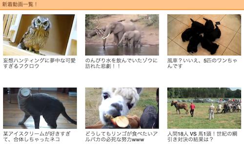 animal buzzの映像たち