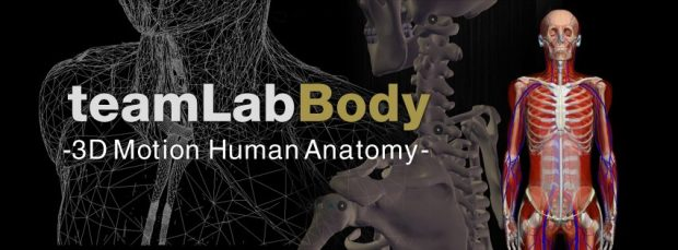 team-lab-body