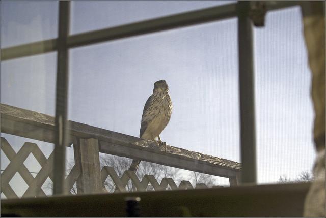 bird-window