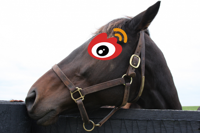 horse-head-sina-weibo-720x480