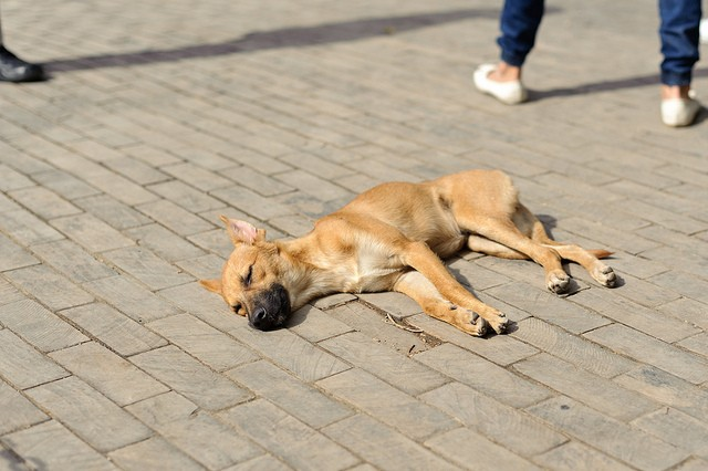 Dog Resting On Wooden Bricks by advencap, on Flickr
