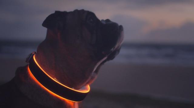 LEDで光る首輪「Buddy」