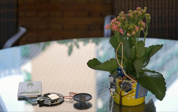 Talking-Flowers-620x390