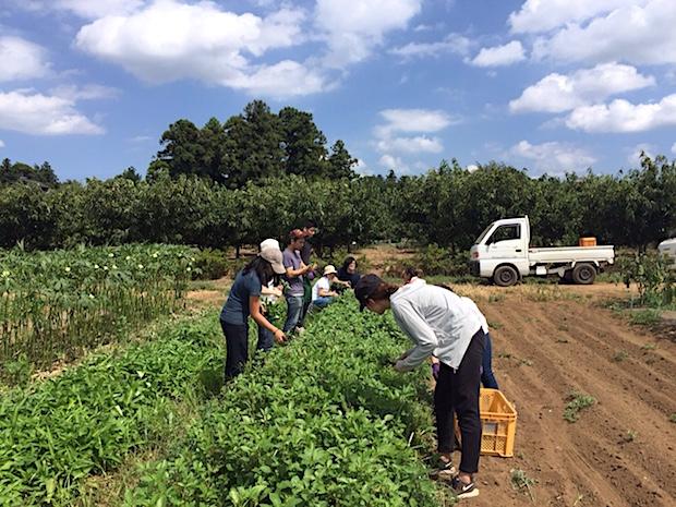 agrigate-harvesting-at-farm