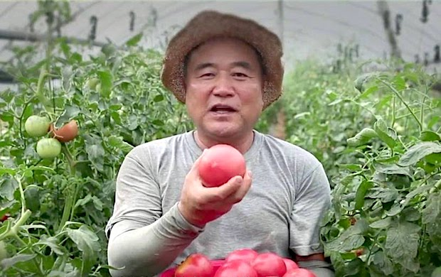 aquatonix-tomato-farmer
