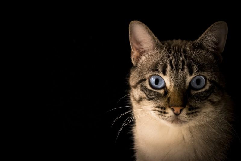 animal-kitten-pet.jpg