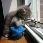 kitten-the-super-duper-focused-sniper