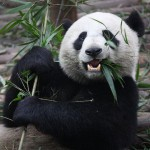 Rocket-Internets-Foodpanda-gets-really-hungry-gobbles-up-7-startup-rivals-in-acquisitions-spree