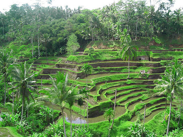 rice-terrace-at-ubud